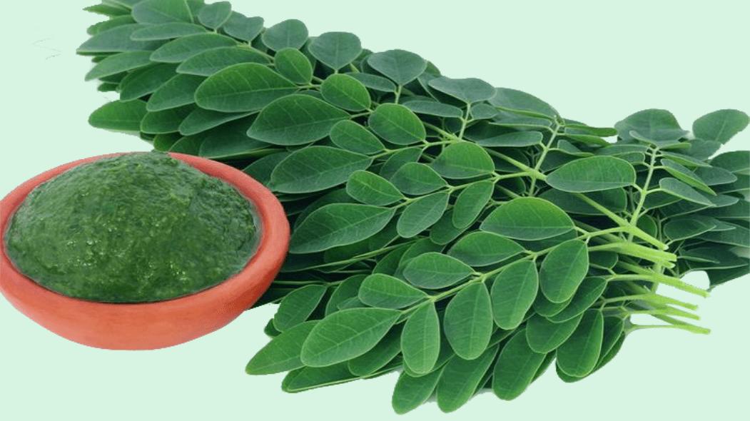 ramuan herbal untuk diabetes dengan daun kelor