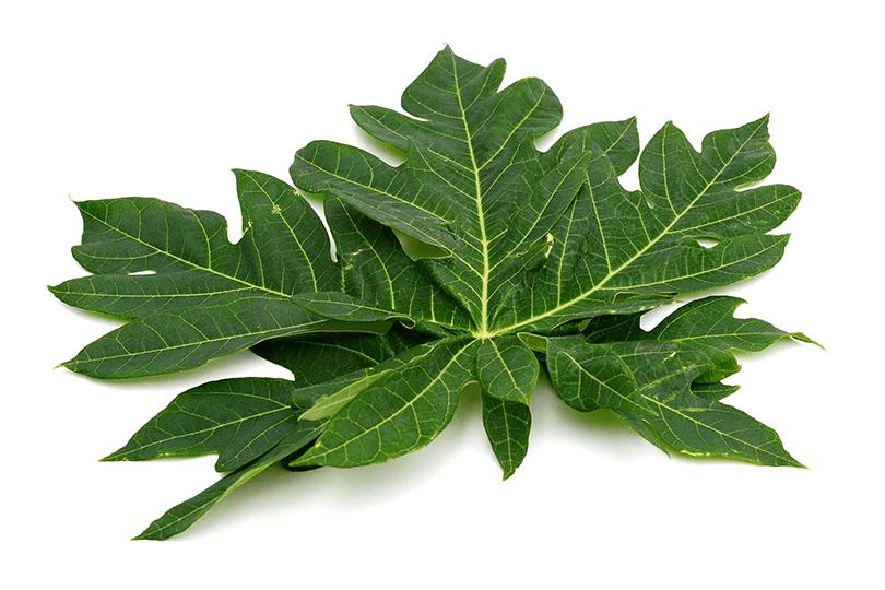 ramuan herbal untuk diabetes dengan daun pepaya