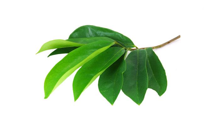 ramuan herbal untuk diabetes dengan daun sirsak